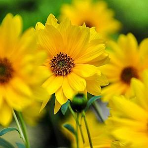Желтые цветы с весны до осени: 50+ видов цветов для цветника