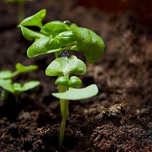 Подкормка и биологические стимуляторы роста для растений