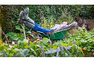Школа ленивого садовода, или как минимизировать труд в саду