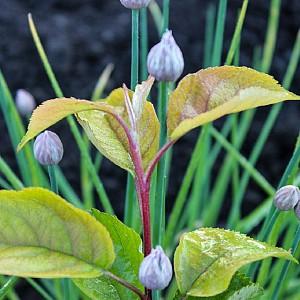 О чем говорят листья: недостаток азота, фосфора, калия