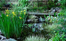 Оформляем водоем: прибрежные многолетние растения