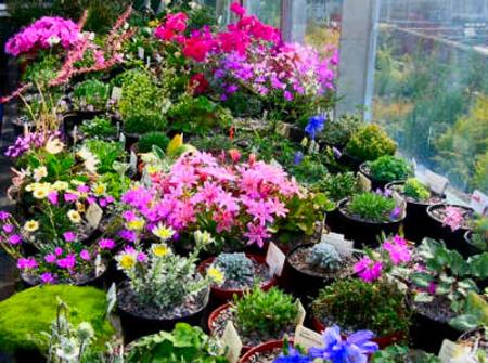 Неприхотливые цветы для альпийской горки фото названия