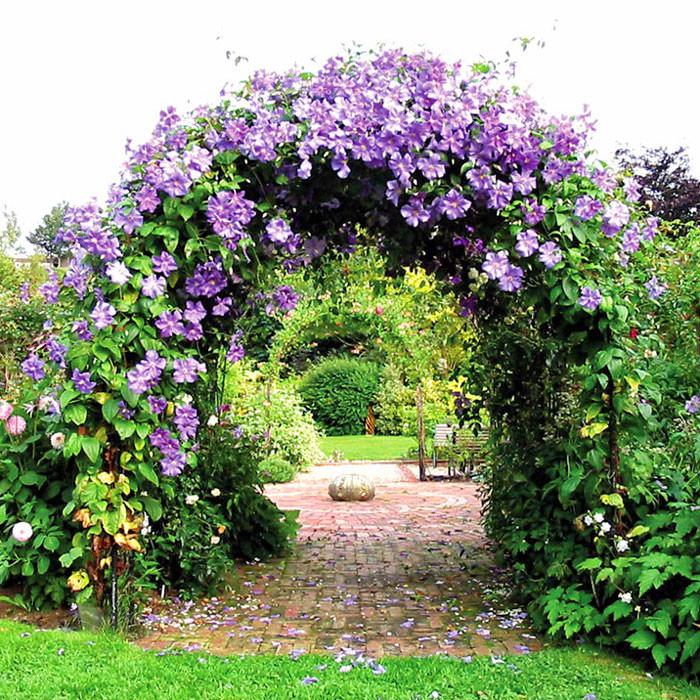 Клематис в саду дизайн