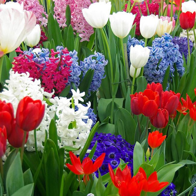 заседание для тех кому не все равно - Страница 39 Hyacinth_part2_01