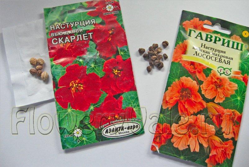 Цветы мирабилис (Mirabilis фото, посадка и уход за ними)