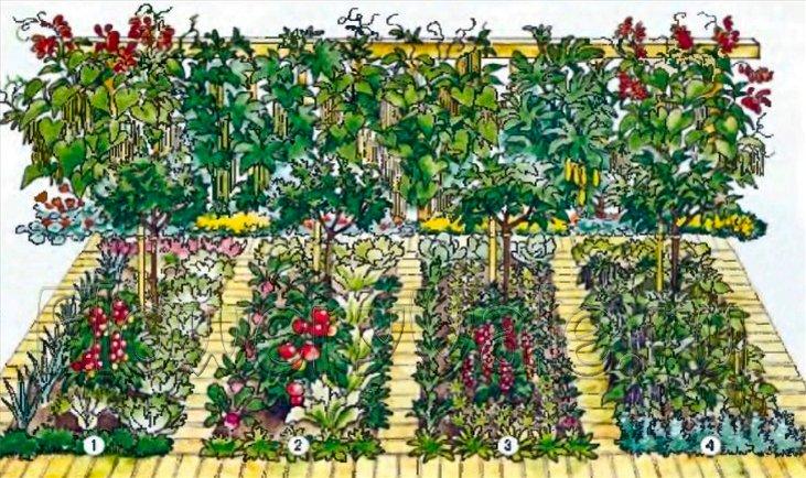 Когда сажать на огороде овощи 809