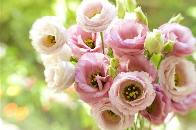 Розы белые много фото