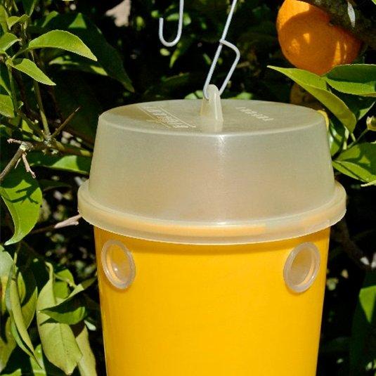 Вместо химии можно применить ловушки со сладкой жидкостью, развешенные в деревьях