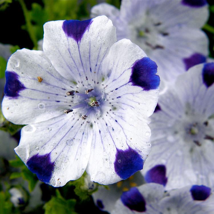 цветы в обед фото