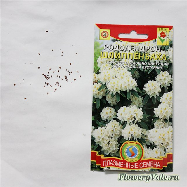 О выращивание азалии из семян 170