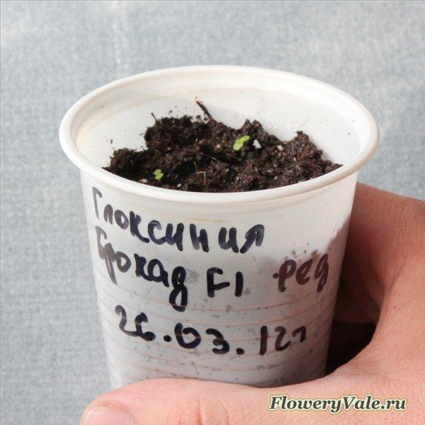 Выращивание рассады эксперимент