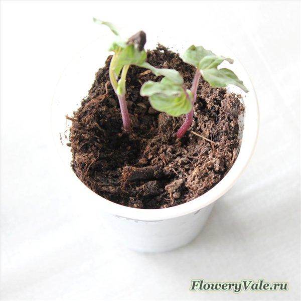 Выращивание рассады: 8 проблем и их решения — FloweryVale.ru