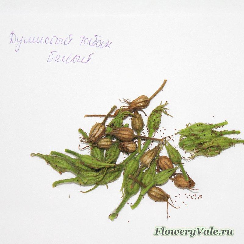 Фото семенных коробочек цветов