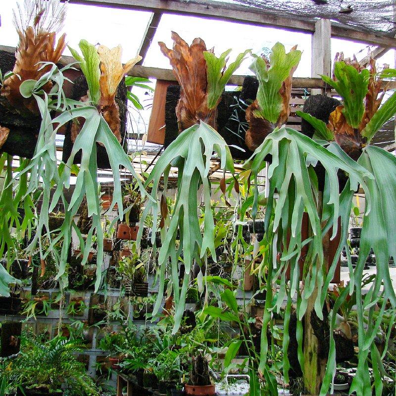 Выращивание эпифитов 37
