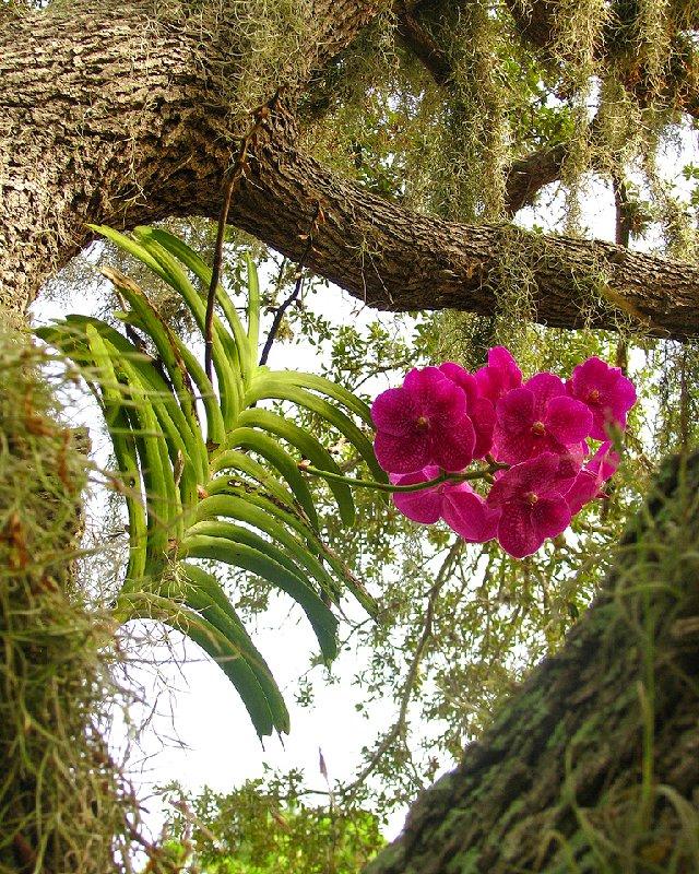 растения от паразитов как принимать