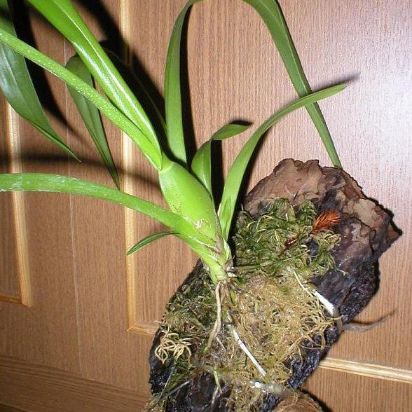 Какие горшки для орхидей нужны, как правильно выбрать емкость 49