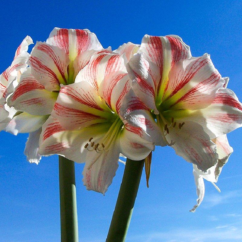 Один вид цветков в корзинке