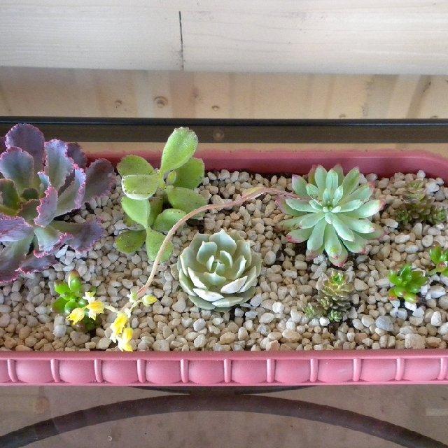 Домашние кактусы и уход за ними | Растим растения!