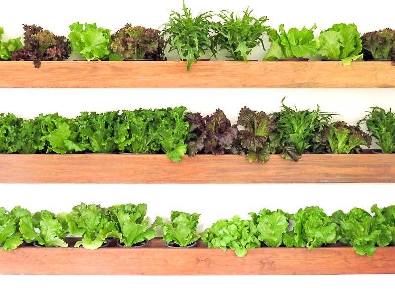 Выращивание зелени летом на балконе 94