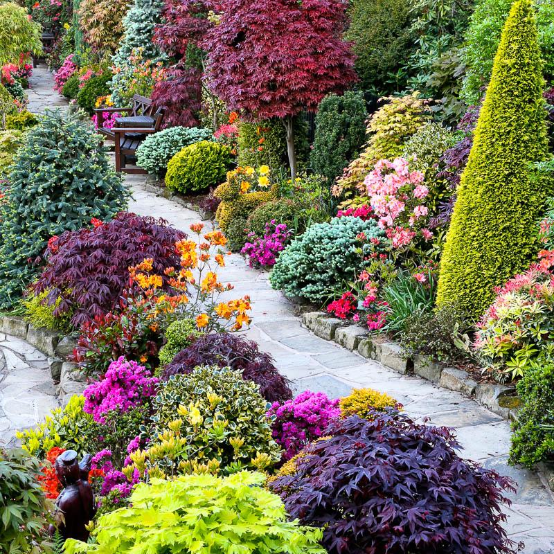 Цветы в саду и огороде дизайн своими руками