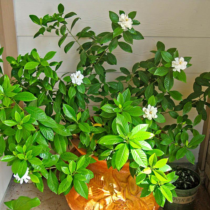 Почему в квартире комнатные цветы не цветут