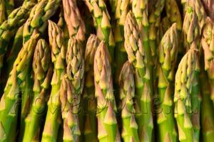 asparagus_03
