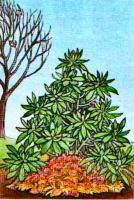 Укрытие растений на зиму рис. 1