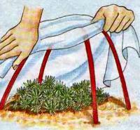 Укрытие растений на зиму рис. 3
