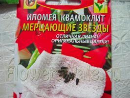 Когда вскрыла пакетик с семенами ипомеи квамоклит, сначала подумала, что вместо семян наложили мышиных какашек :)