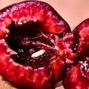 Плод вишни, поврежденный личинкой вишневой мухи