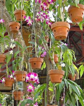 Подвесные горшки для выращивания орхидей