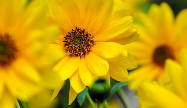 Ах эти желтые цветы, меня пленили!