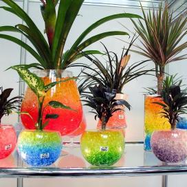 В гидрогеле можно выращивать комнатные растения