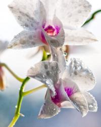 Все-таки цветущие орхидеи очень красивы