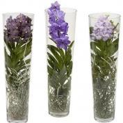 Орхидеи в стеклянных вазах