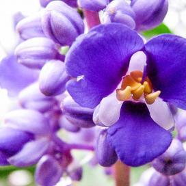 А так красиво цветет замиокулькас ланцетовидный (Zamioculcas Lanceolata) в Кью-Гарденсе, Лондон