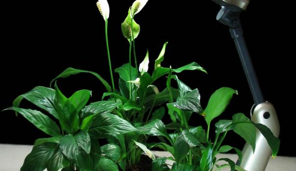 фитолампы светодиодные лампы для растений купить в калининграде