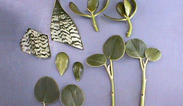 заказать семена комнатных растений и цветов